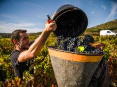 Mond'Arverne - liste des producteurs de vins